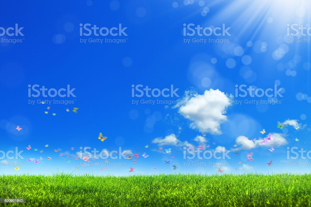 spring in nature stock photo