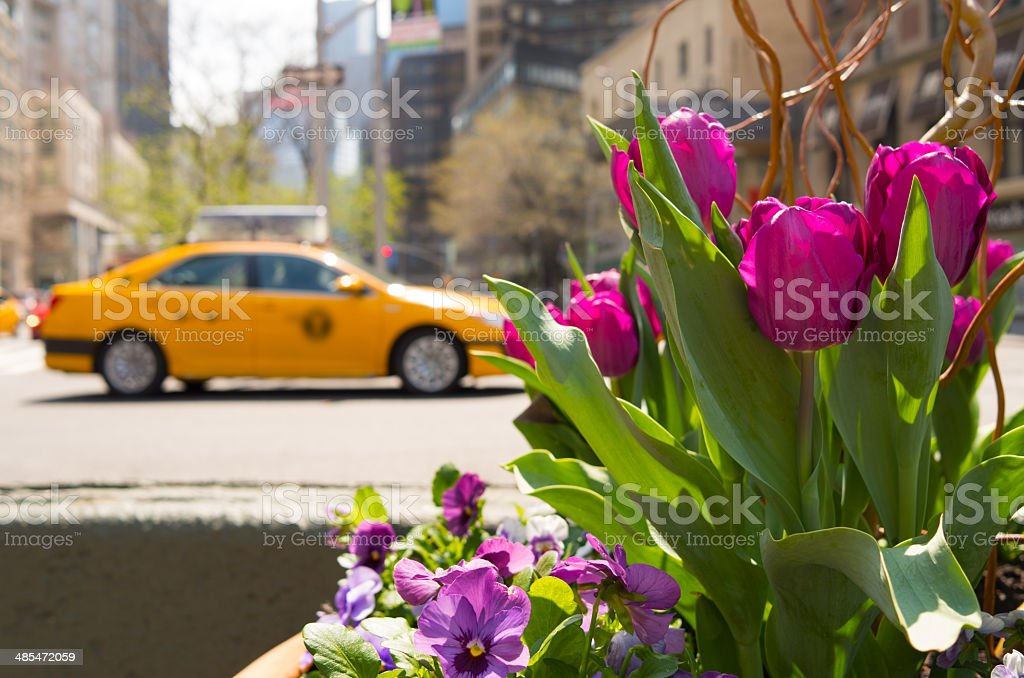 Frühling in New York City – Foto