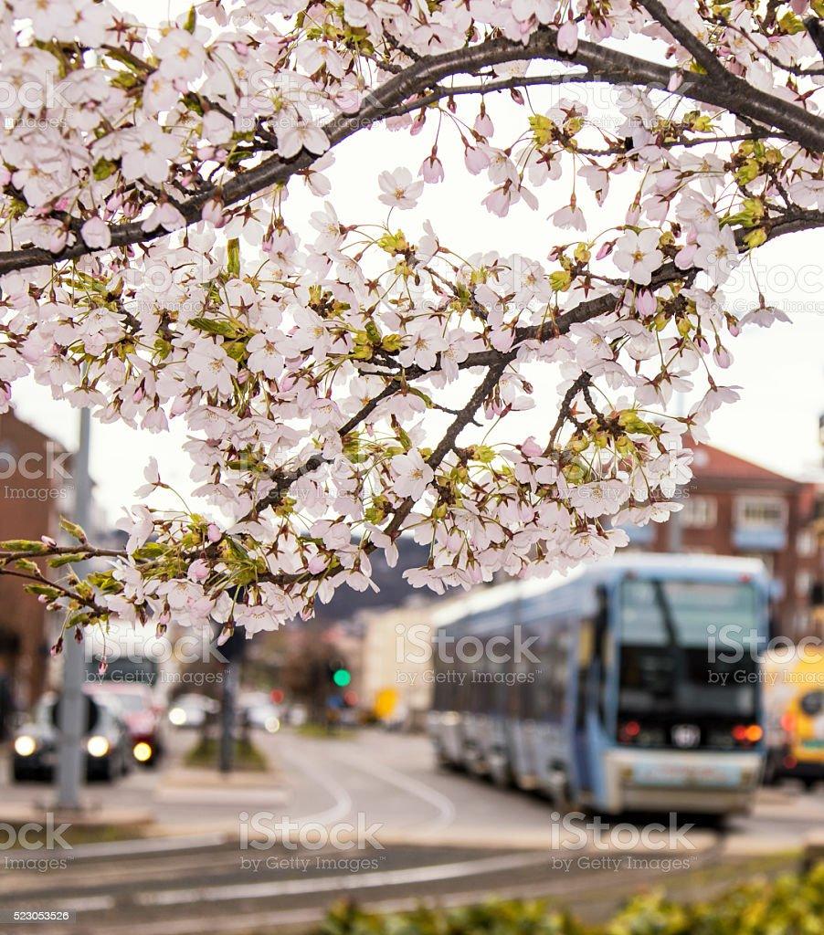 Primavera en Oslo, Noruega - foto de stock