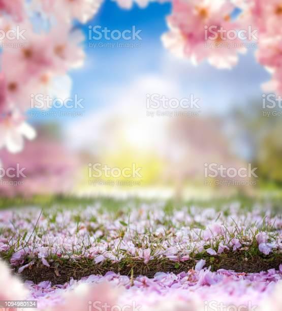 Spring in park picture id1094980134?b=1&k=6&m=1094980134&s=612x612&h=z27dra7obyz4nnn6vgohyhmm4qv22e01ukb8uuwqm s=