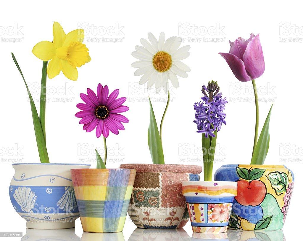 Spring in pots stock photo