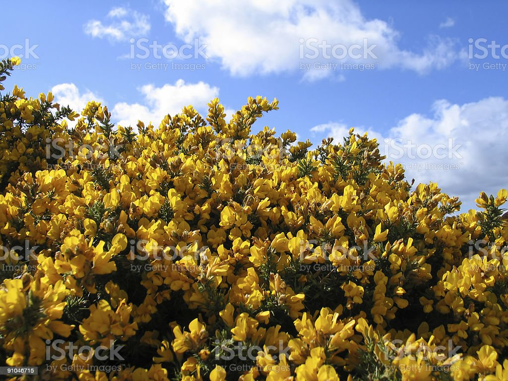 Spring in Scotland royalty-free stock photo