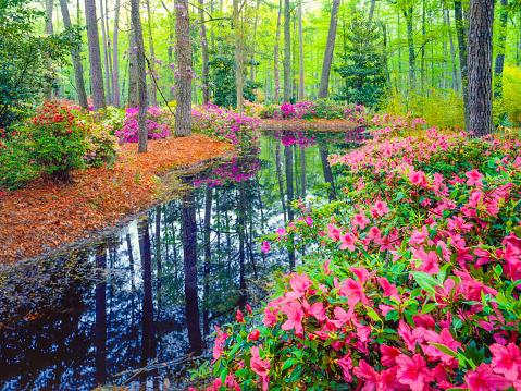 Spring in Southern Woodland Garden