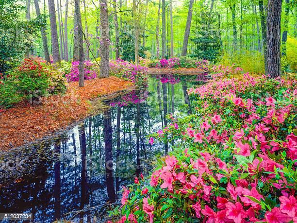 Spring in southern woodland garden picture id512037234?b=1&k=6&m=512037234&s=612x612&h=qurgre7w1q0r5u4oivvp70ccsnwqbpplscsyqxsjtik=
