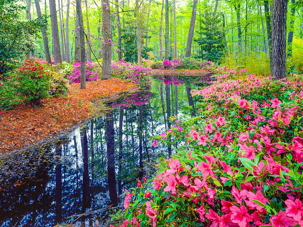 Spring in southern woodland garden picture id512037234?b=1&k=6&m=512037234&s=612x612&w=0&h=xunxiku7ltpxixzjeq6xih8wckxj6e9epqyu8aw0jms=