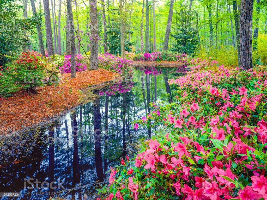 Frühling im südlichen Woodland Garten – Foto