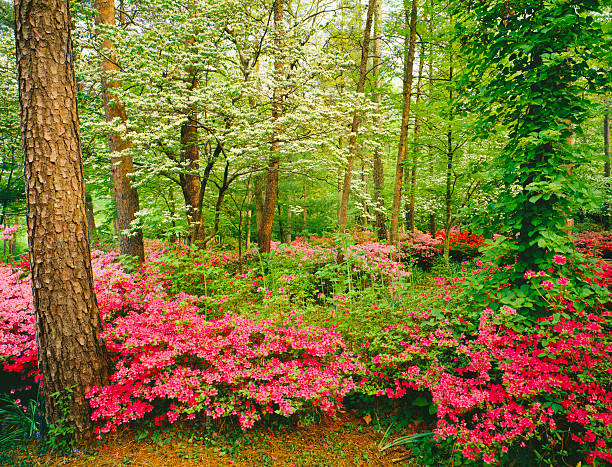 Spring in Southern Woodlands stock photo