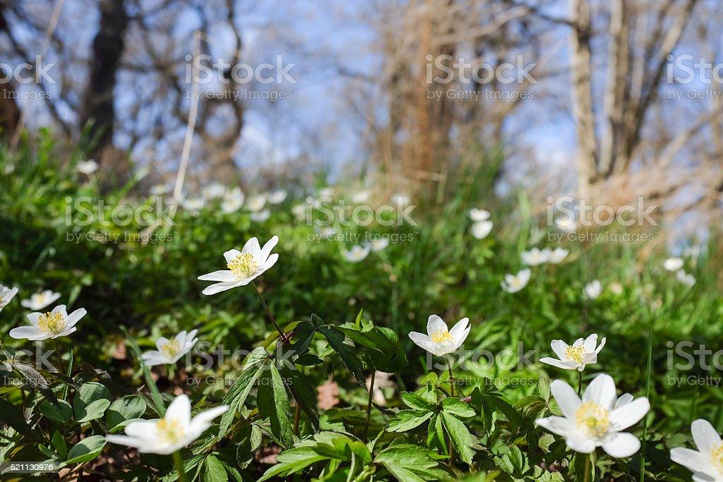 Spring in Sweden stock photo