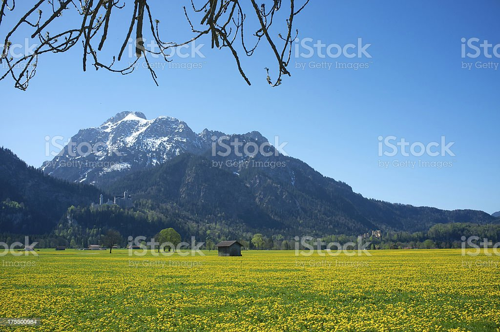 Spring in the Alps royalty-free stock photo