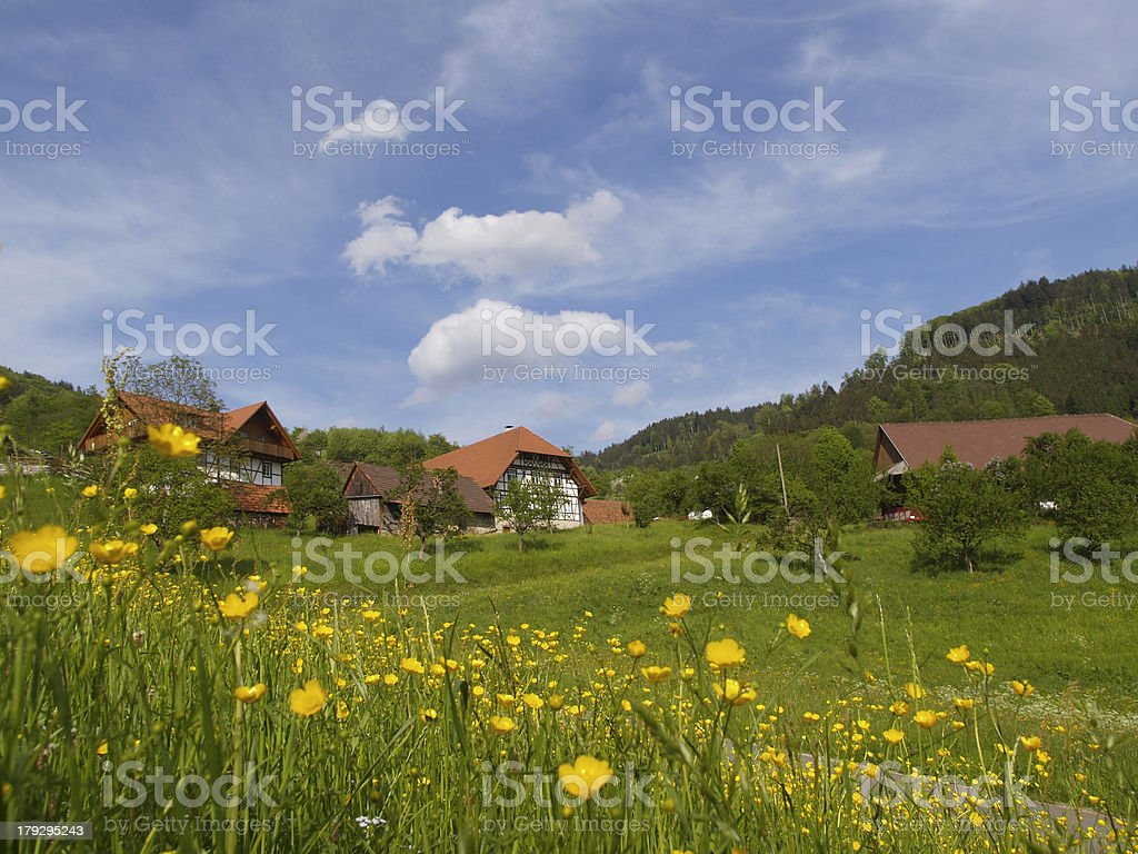 spring in the black forsest royalty-free stock photo