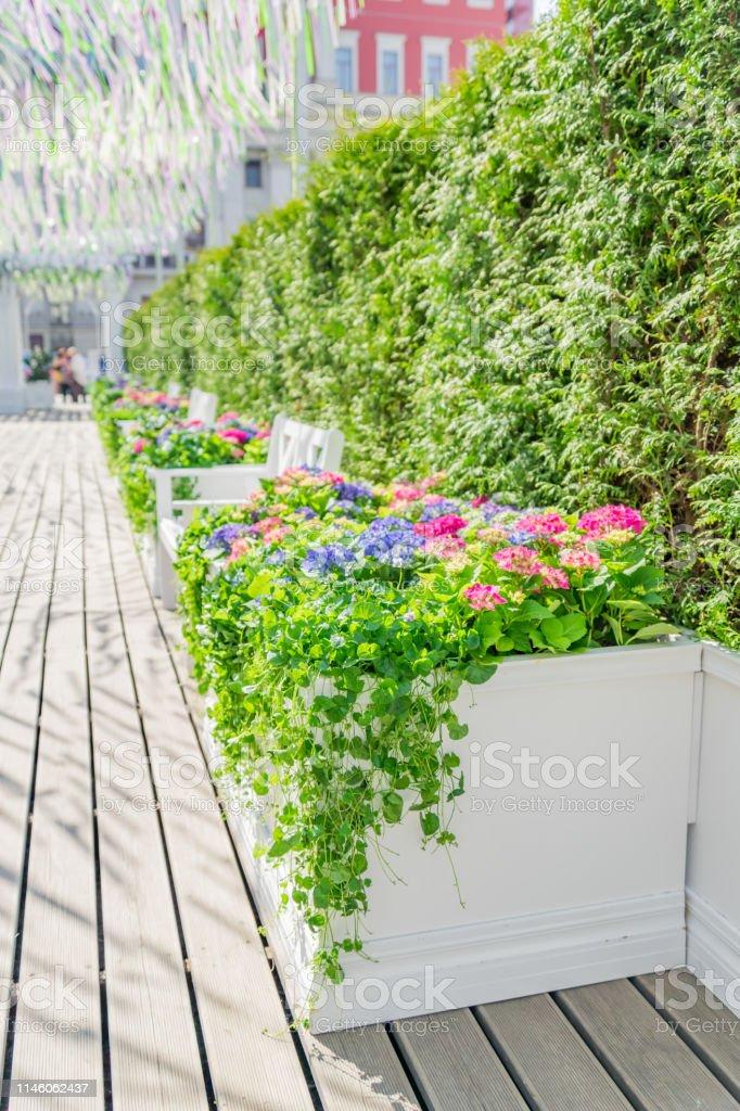 花 咲く 街