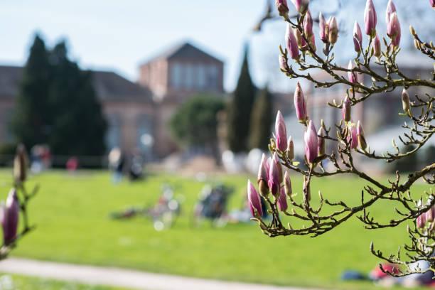 Frühling in der Stadt – Foto