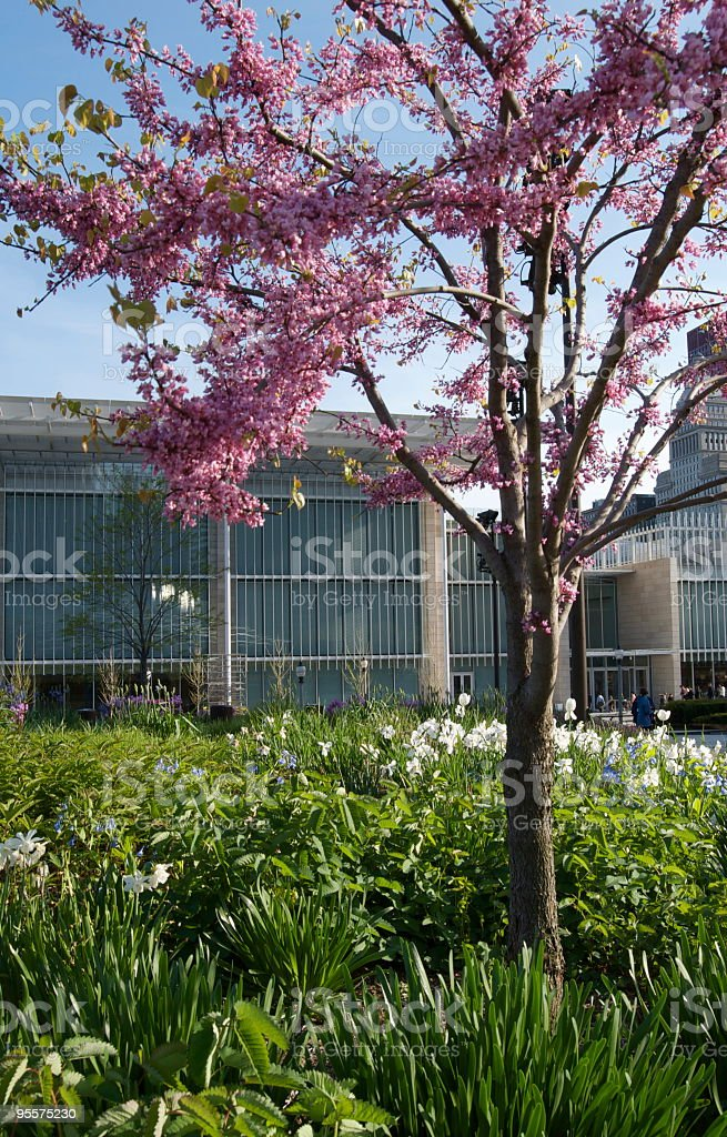 Spring in the city royalty-free stock photo