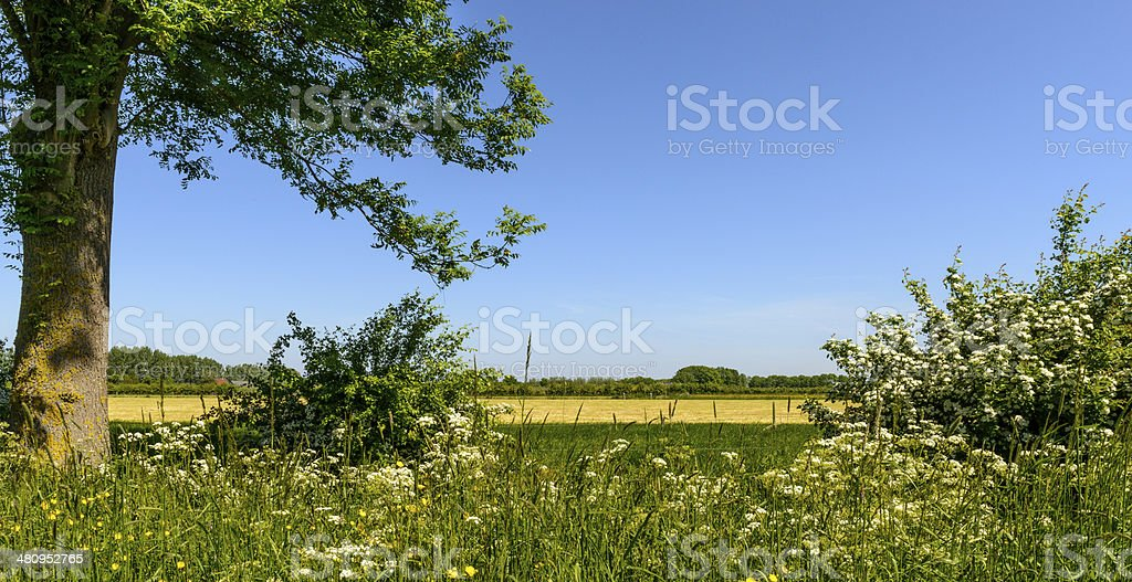 Spring in the countryside royalty-free stock photo