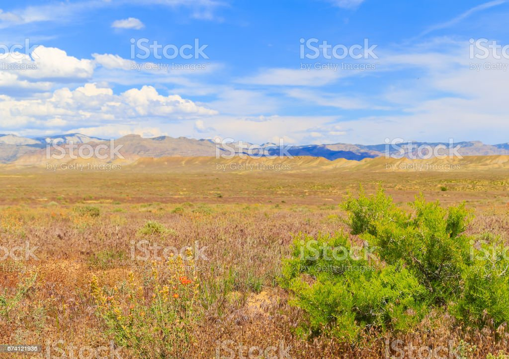 Spring in the Desert 免版稅 stock photo