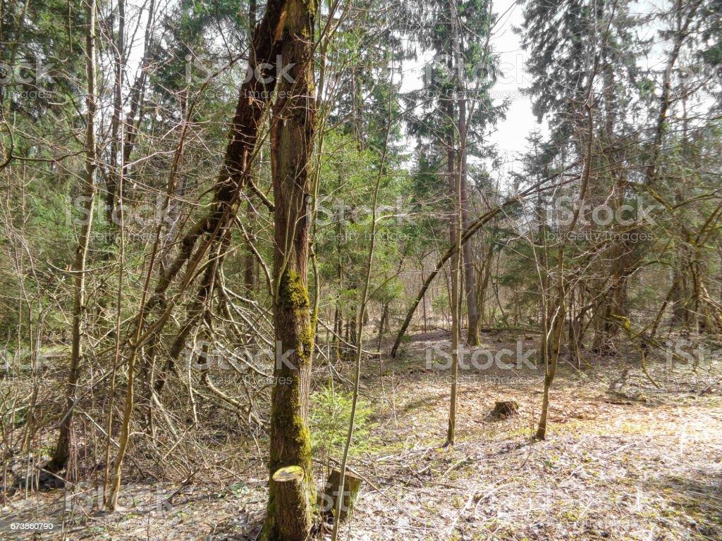 Ormanda bahar. Nisan ayında güneşli bir gün. Doğa Doğu Avrupa royalty-free stock photo