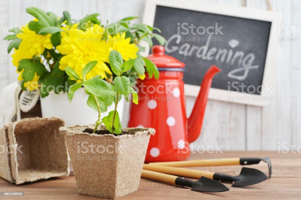 Spring in the garden concept royalty-free stock photo