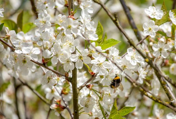 Spring in the garden stock photo