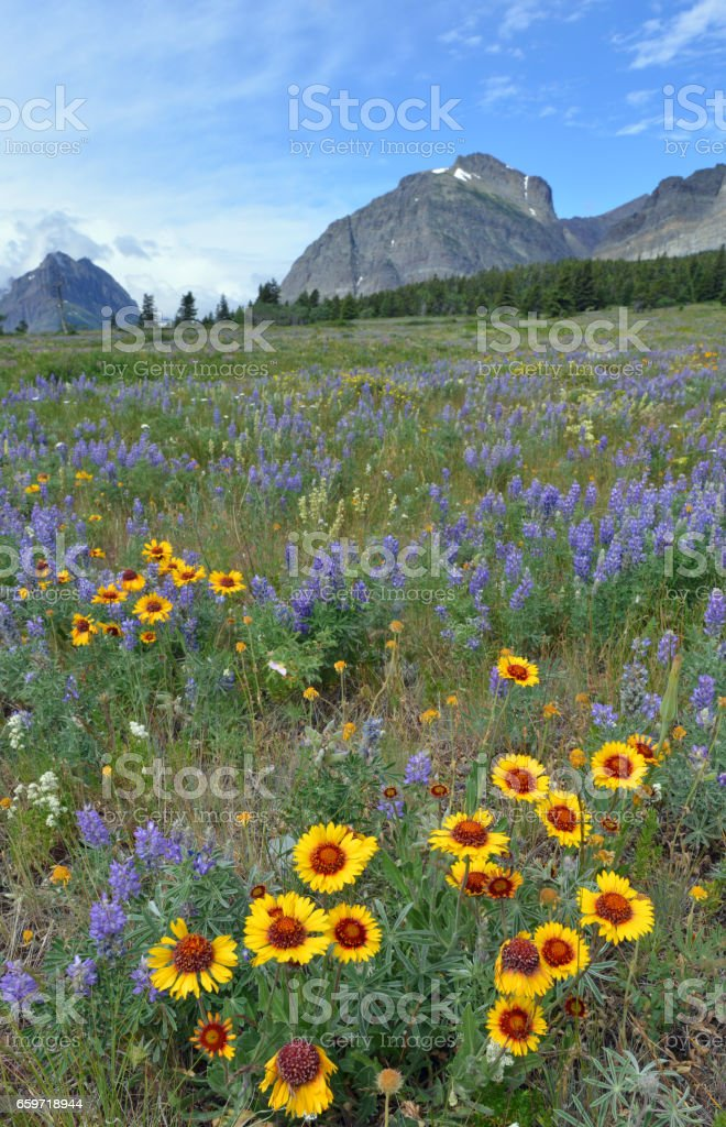 Spring in the mountains stock photo