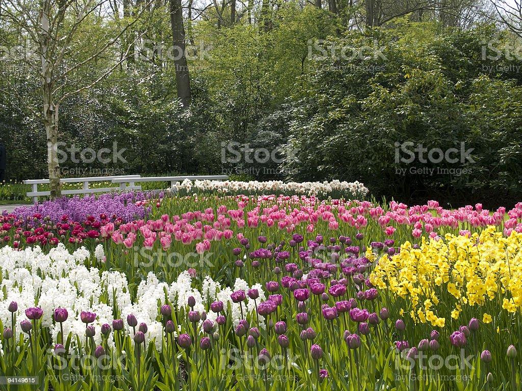 Frühling im Park – Foto
