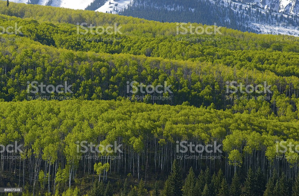 Spring in the Rockies royalty-free stock photo