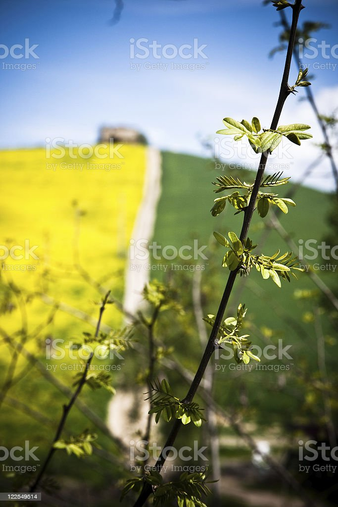 Spring in Tuscany royalty-free stock photo