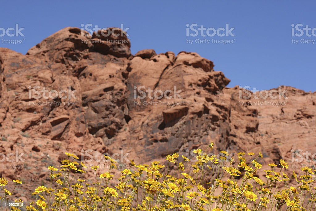 Spring in Valley of Fire, Nevada stock photo