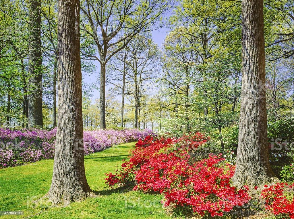Spring in Virginia royalty-free stock photo