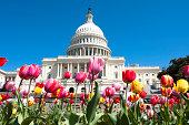 istock Spring in Washington DC 174694250