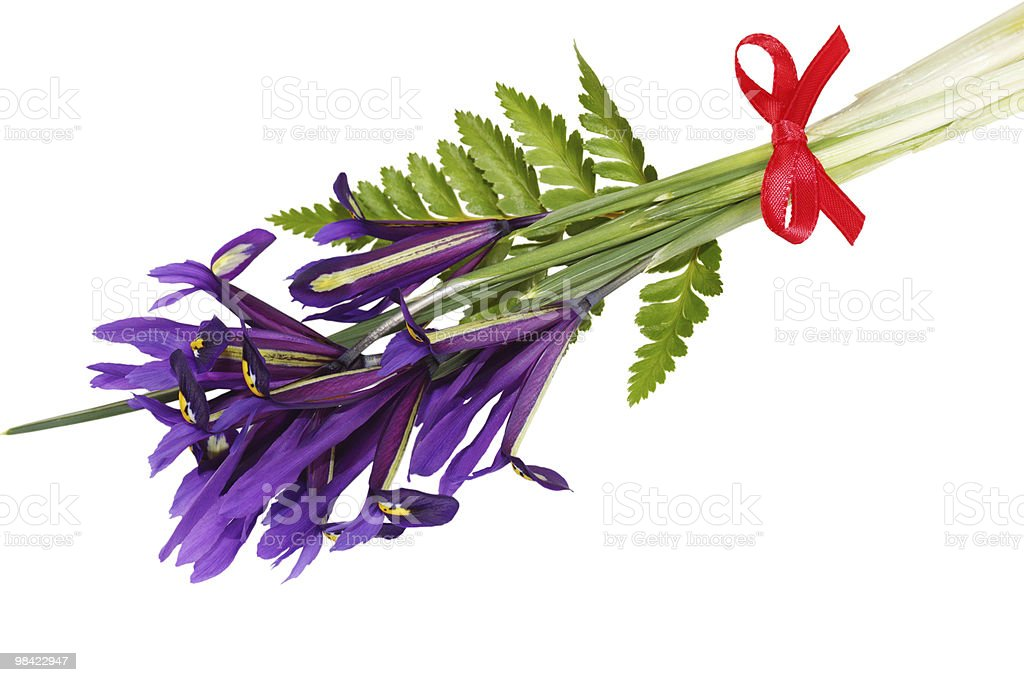 Spring Iris and Red Bow royalty-free stock photo