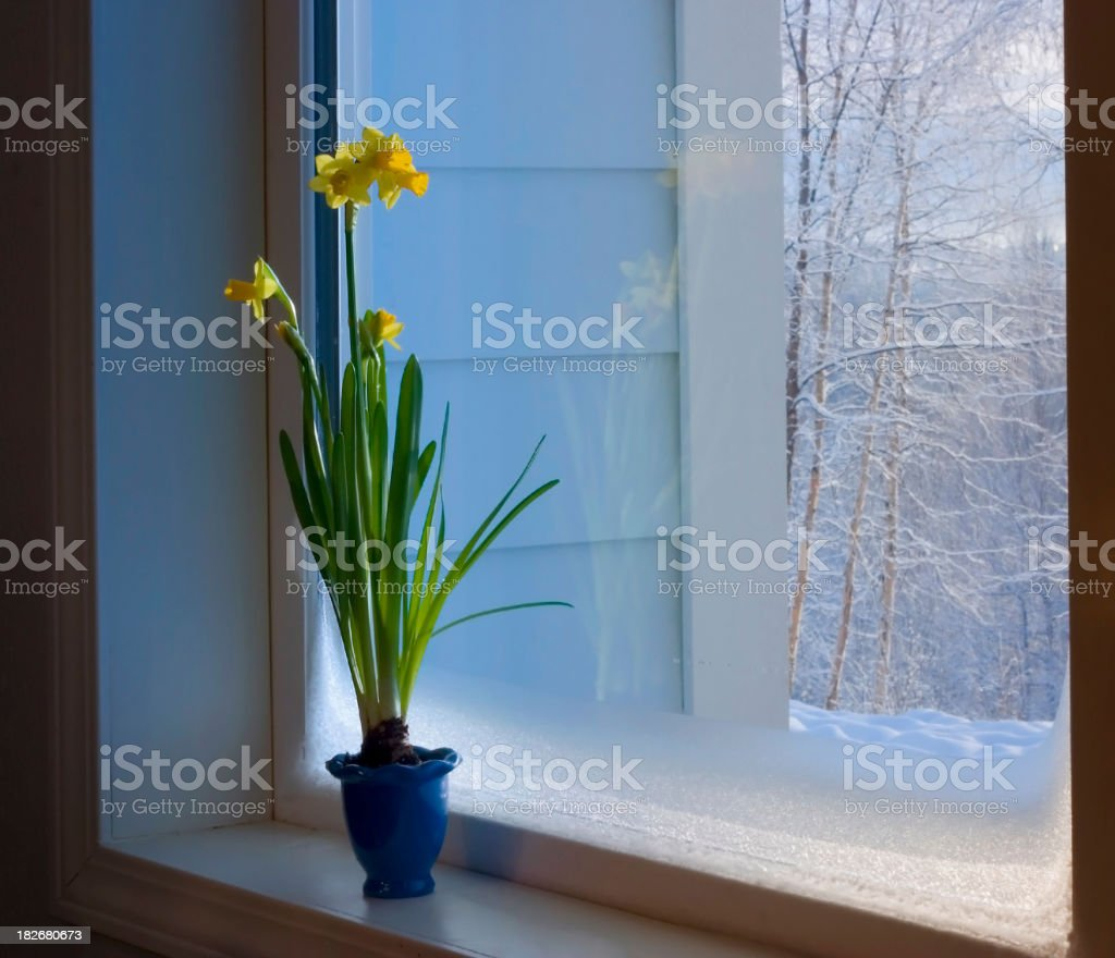 spring is coming! stock photo