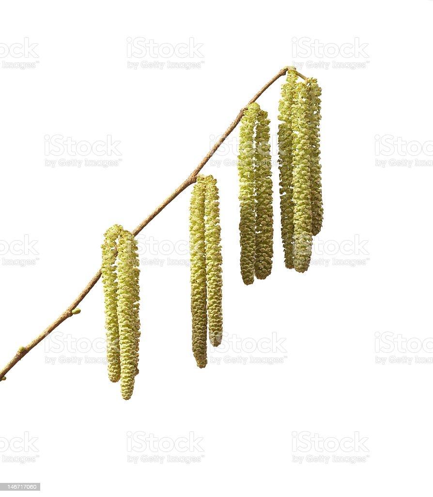 spring es comming - foto de stock