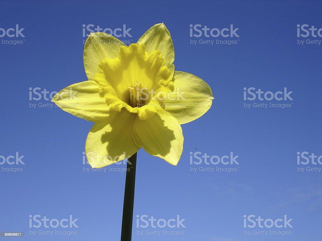 La primavera está en el aire foto de stock libre de derechos