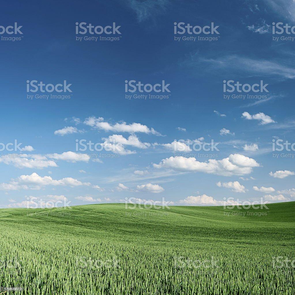 Spring landscape 30MPix - XXXXL size royalty-free stock photo