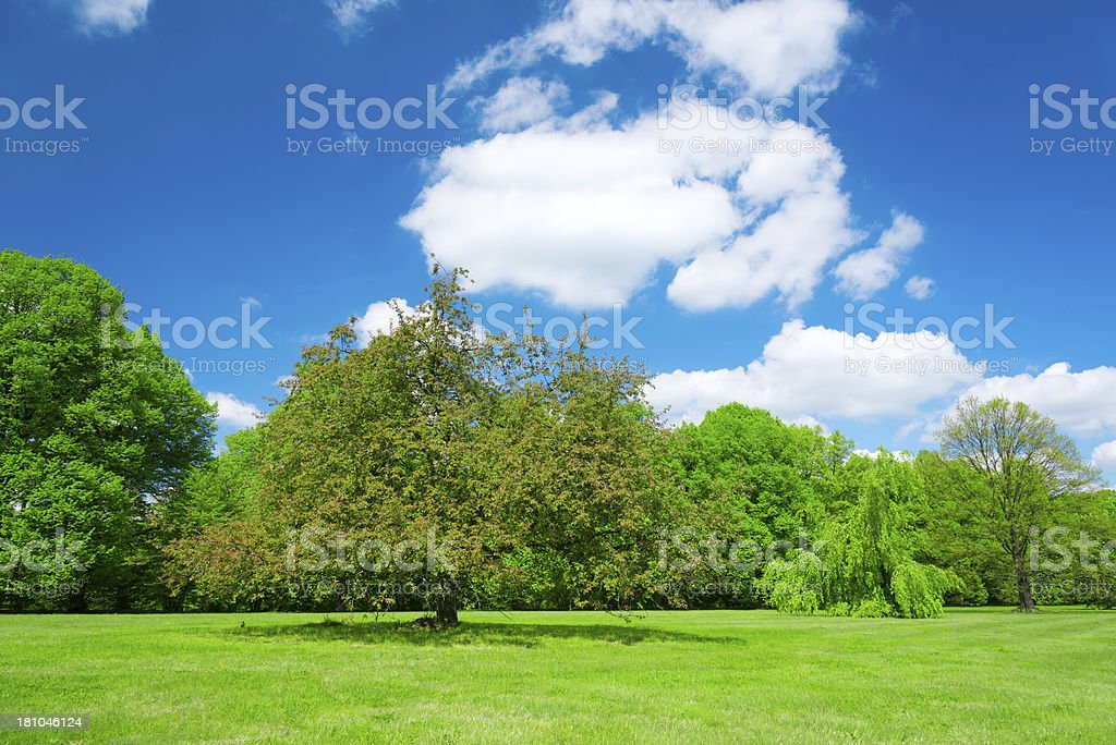 Spring Landscape- 36 Mpx royalty-free stock photo