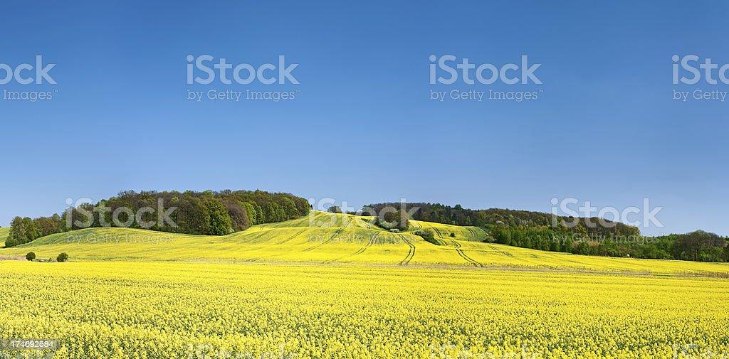 Spring landscape 54MPix XXXXL - meadow, blue sky royalty-free stock photo