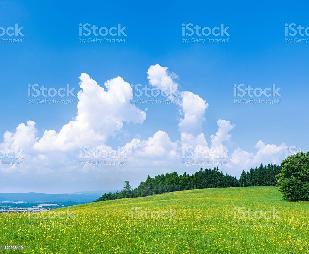 Spring landscape 72MPix XXXXL - green field, blue sky royalty-free stock photo