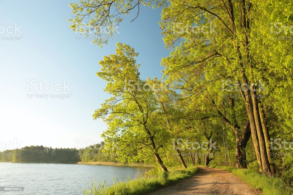 Spring landscape at dawn zbiór zdjęć royalty-free