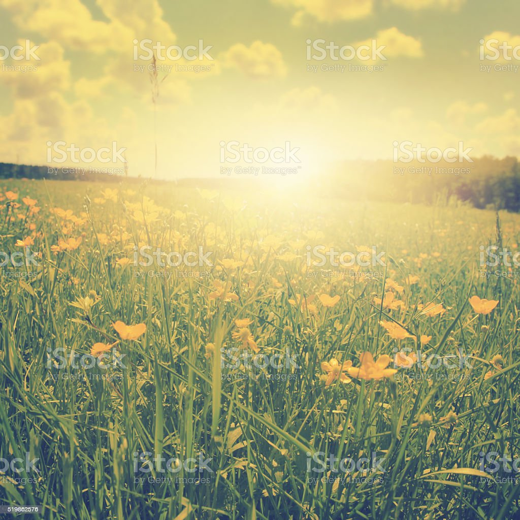 Spring landscape at sunset in vintage style. stock photo