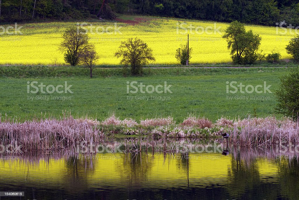 spring landscape - fields and meadows royalty-free stock photo
