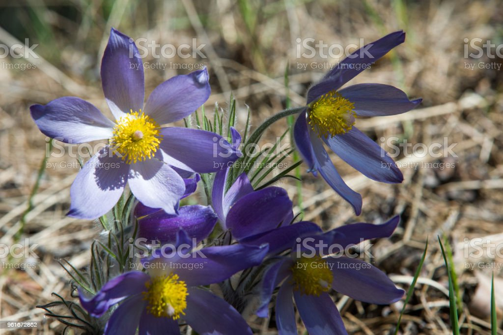 Paysage De Printemps Fleurs Qui Poussent Dans La Nature Fleur