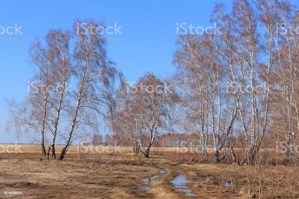 Spring landscape in the Altai region of Russia stock photo