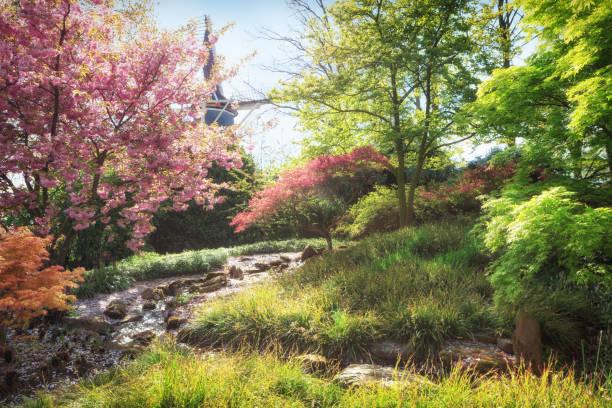 paysage de printemps. nature en fleurs - paysage mois de mars photos et images de collection