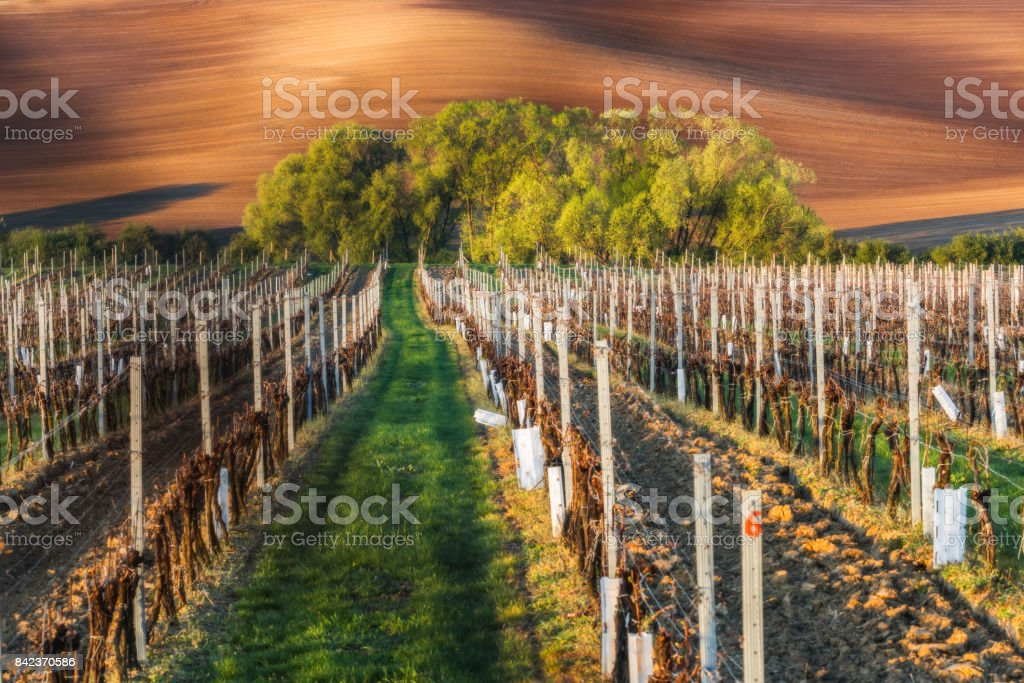 Spring landscape of South Moravia and agriculture stock photo
