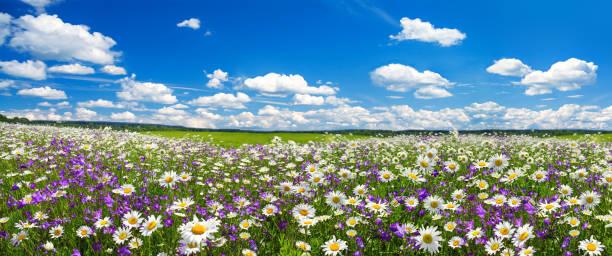 Spring landscape panorama with flowering flowers on meadow picture id1093508062?b=1&k=6&m=1093508062&s=612x612&w=0&h=zwmavinxwgv8jhatkjpoldakxxhsp9iobntdtnw7xvw=