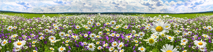 Spring Landscape Panorama With Flowering Flowers On Meadow Stock Photo -  Download Image Now - iStock