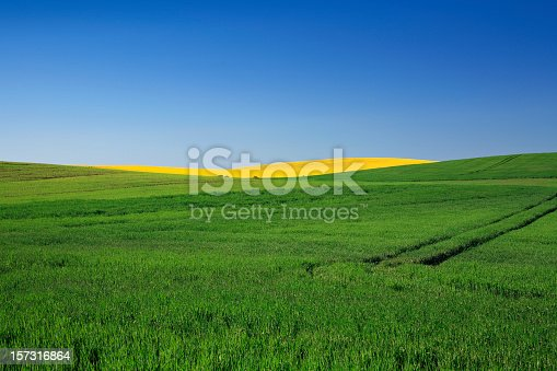 fresh spring fields under clear sky