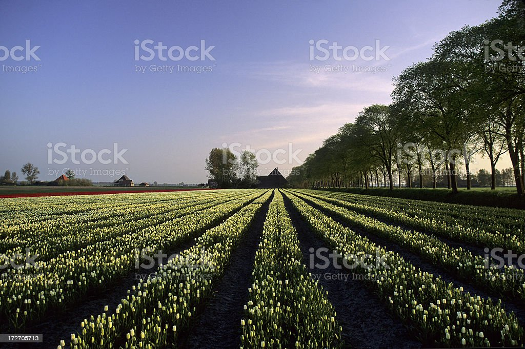 Spring Landscape royalty-free stock photo