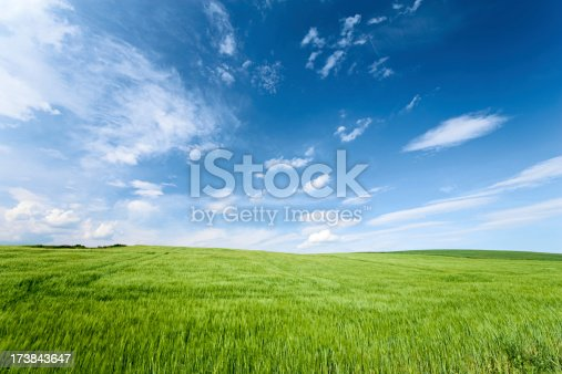 Spring panorama - green field and the blue sky