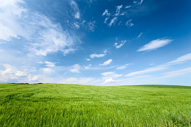 Spring landscape Spring panorama - green field and the blue sky horizon over land stock pictures, royalty-free photos & images